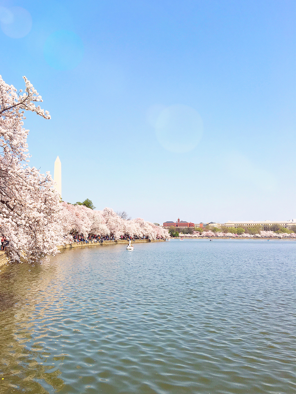 DC Cherry Blossoms 2016 6 resized